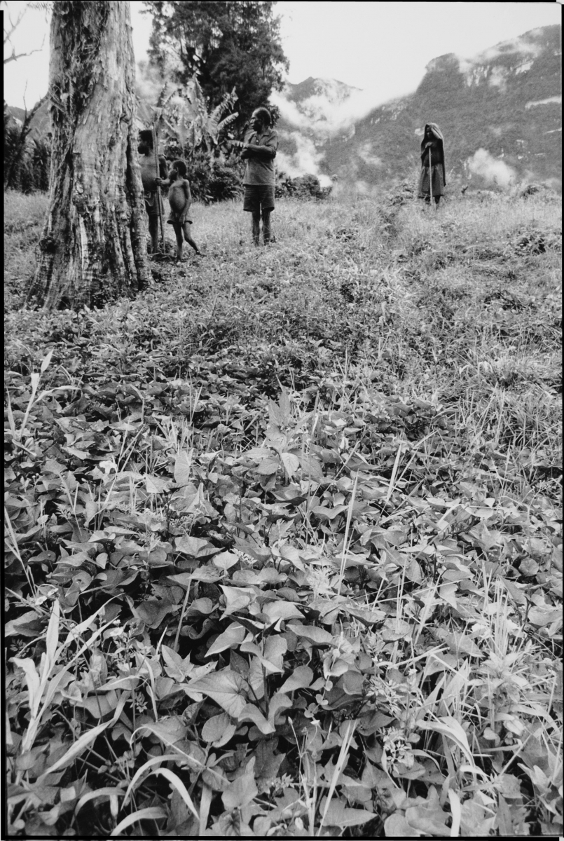 man and children in potatoe field