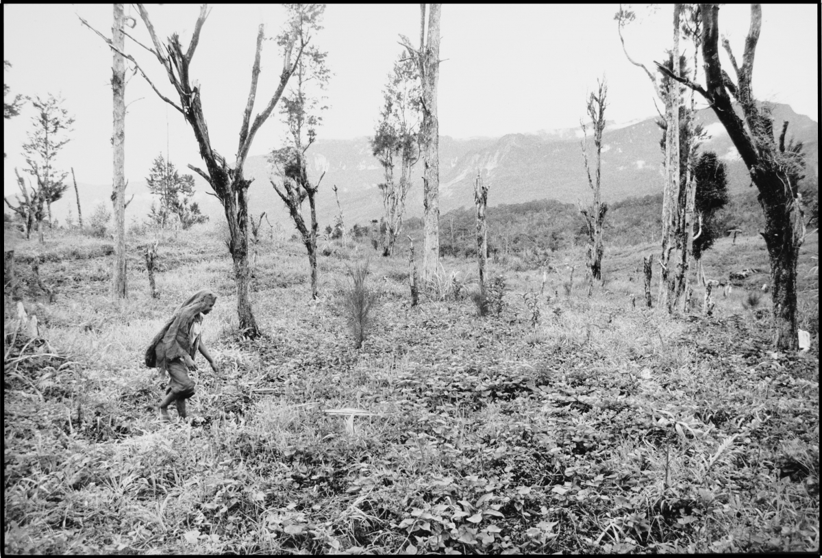 woman with trees in potatoe field